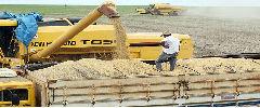 Ministro diz que safra de soja do Brasil pode atingir recorde de até 90 mi t