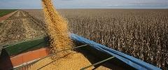 Custo do frete de grãos no país supera em até três vezes o de concorrentes