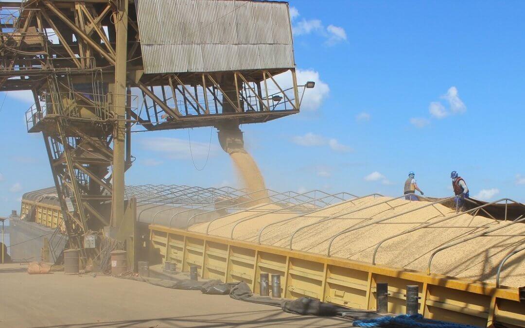 IBGE estima safra recorde de 239,8 milhões de toneladas em 2019
