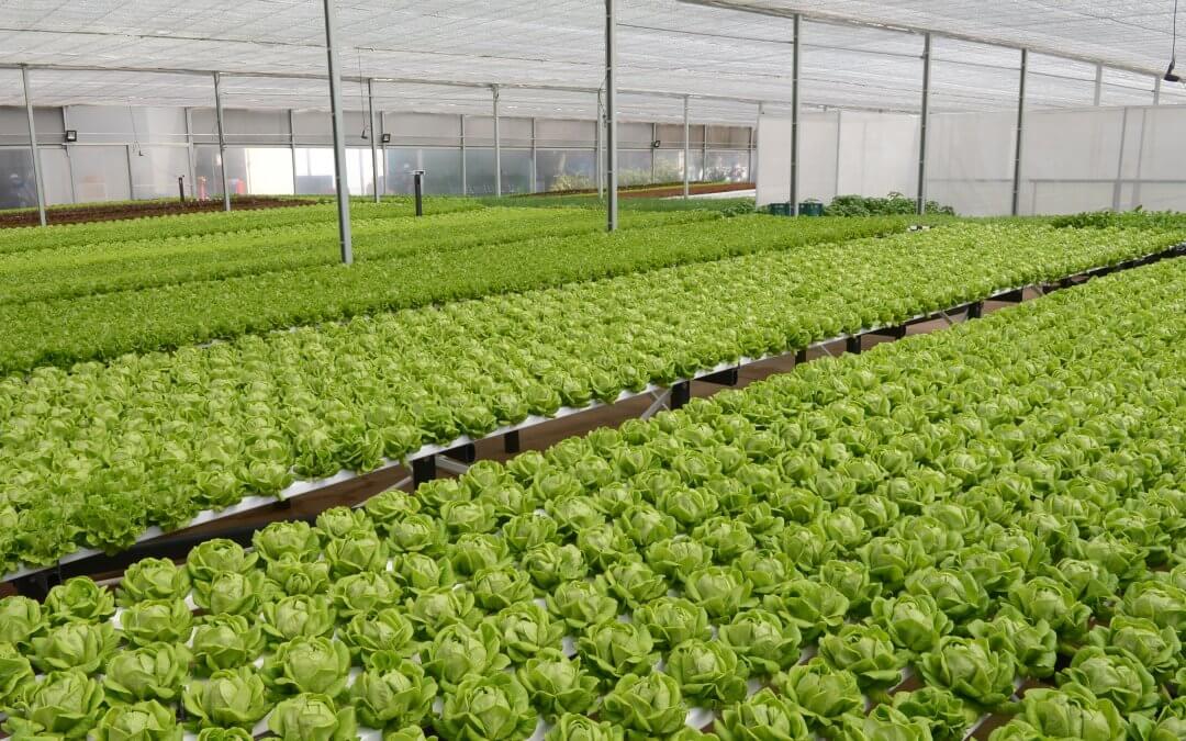 Mercedes-Benz inaugura Fazenda Urbana para o plantio de hortaliças na fábrica de São Bernardo do Campo